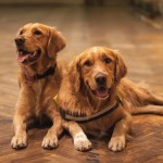 Healthy Dog Central: Social Pups