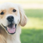 Safe Exercise Programs for Your Dog