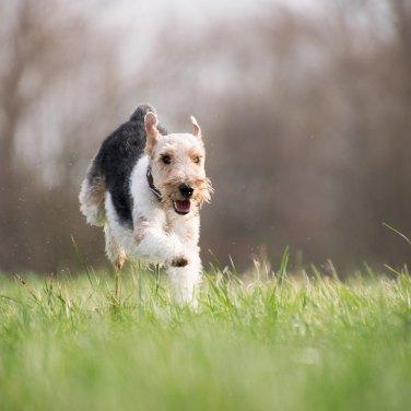 Expert Advice: Dog Allergies
