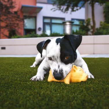 7 Ways to Introduce Puppies to Social Situations