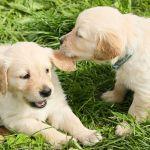 How Socialization Can Improve a Dog's Behavior
