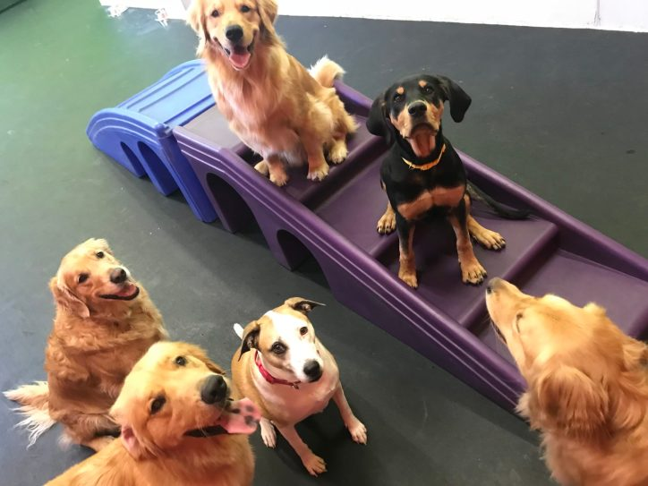 Sit, Stay and say Cheese!