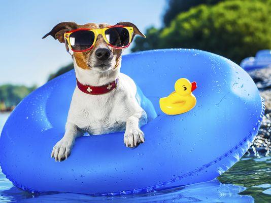 Puppy splash pad pawty event.