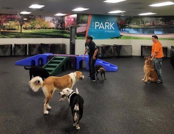 Dog Agility Training Plano Texas