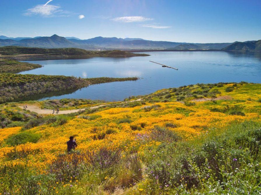 Lake Hemet Riverside CA with wildflowers