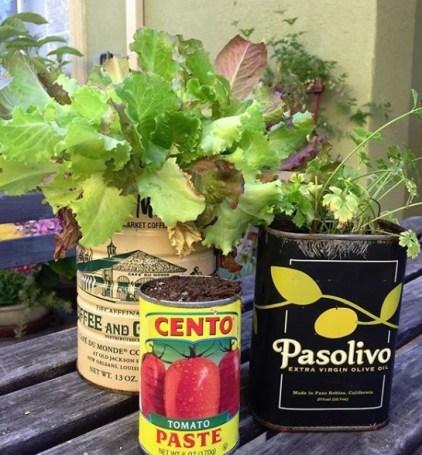 Tin Can Gardening