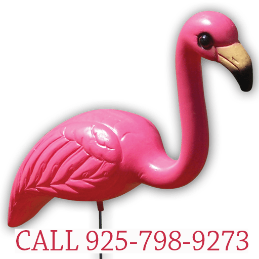 Greetings by the Yard, Flamingo Surprise, Cards by the Yard
