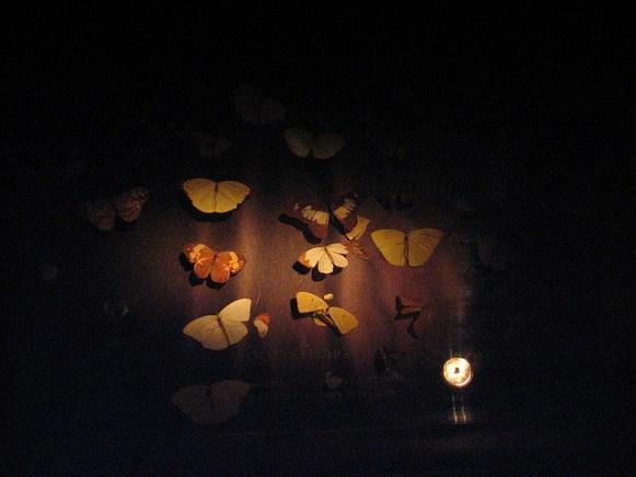 Mariposas en el Museum of Jurassic Technology. Foto: Mulling it Over via Flickr.