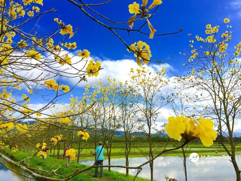 10 - Flower Shot in Danongdafu Forest