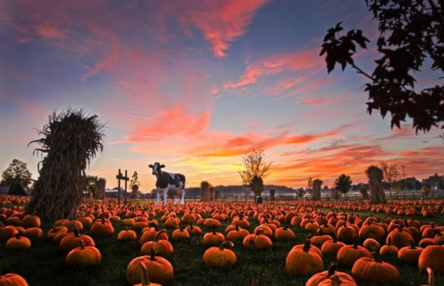 Pumpkin-Patch-HDR-4-832x536