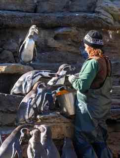 Celine Pardo feeding the penguins