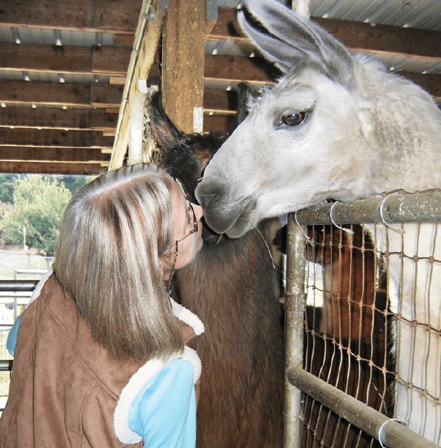 "Mary Donaty of Paradise Found Fiber Farm in Clinton ""kisses"" one of her llamas. She also raises alpacas and pygora goats on her farm."