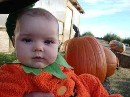 green-bluff-pumpkins-2