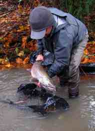 Fishing-Coho-Salmon.jpg