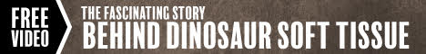 Free Video - The Fascinating Story Behind Dinosaur Soft Tissue