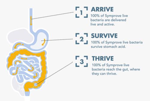 La santé intestinale
