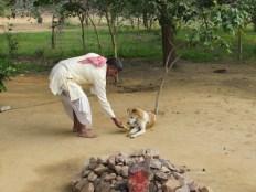 A cautious but grateful dog