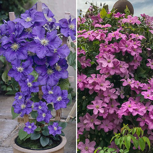 Indoor Hanging Basket Plants
