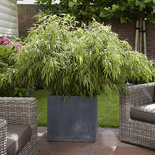 Pond Plant Containers Sale