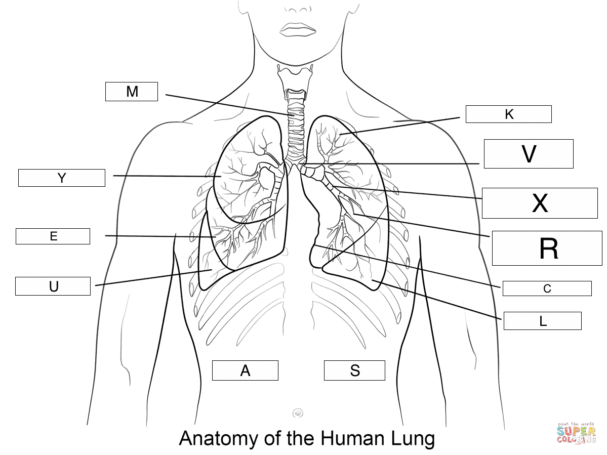 Diagram Of Esophagu Cancer
