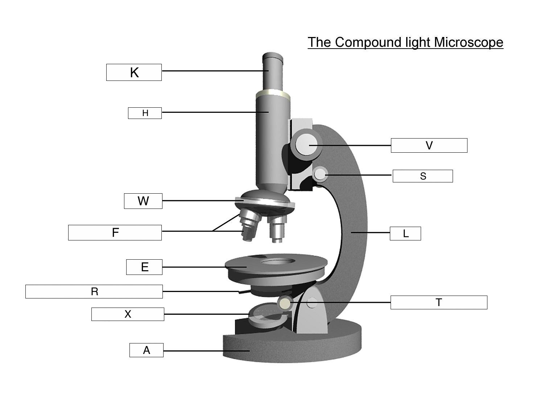 The Microscope Lesson