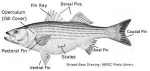 fish (lesson 0375)  TQA explorer
