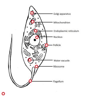 protists (lesson 0439)  TQA explorer