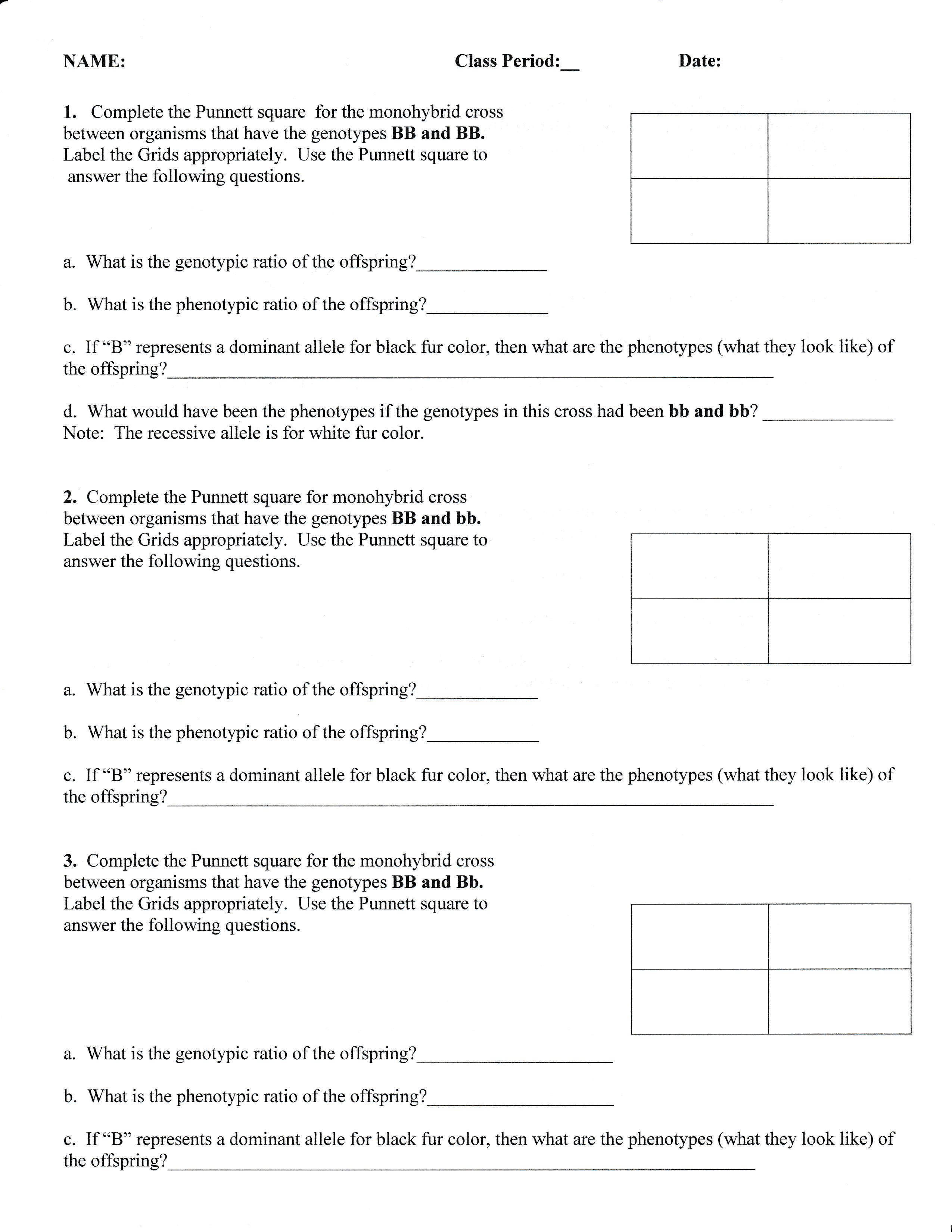 Punnett Squares Instruction Practice Amp Assignment 50 Pts