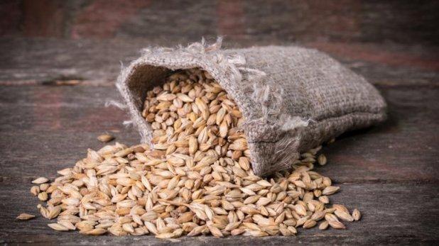 Para cebada, la intención de siembra es de 950.000 hectáreas y una producción de 3.600.000 toneladas