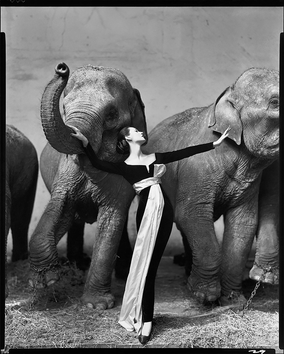 """""""Dovima con elefantes, vestido de noche de Dior, Cirque d'Hiver, París, agosto de 1955"""" (Richard Avedon, 1955)"""