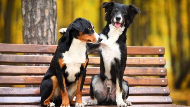 Es importante estar al tanto de las situaciones que pueden generar estrés en el perro (iStock)