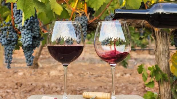 El vino es la bebida nacional de los argentinos (Getty)