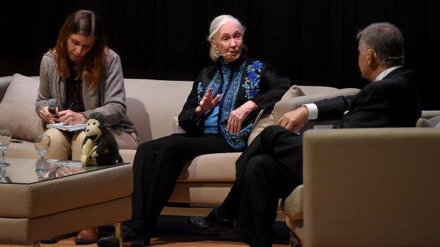 A los 83 años, Goodall escribió más de 70 artículos sobre sus investigaciones, una decena de películas y veinticinco libros en inglés. (Nicolás Stulberg)