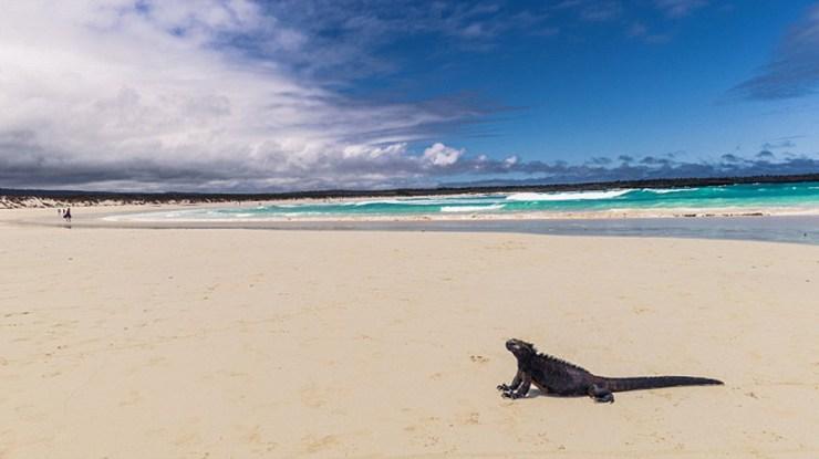 Playa Bahía Tortugas (IStock)