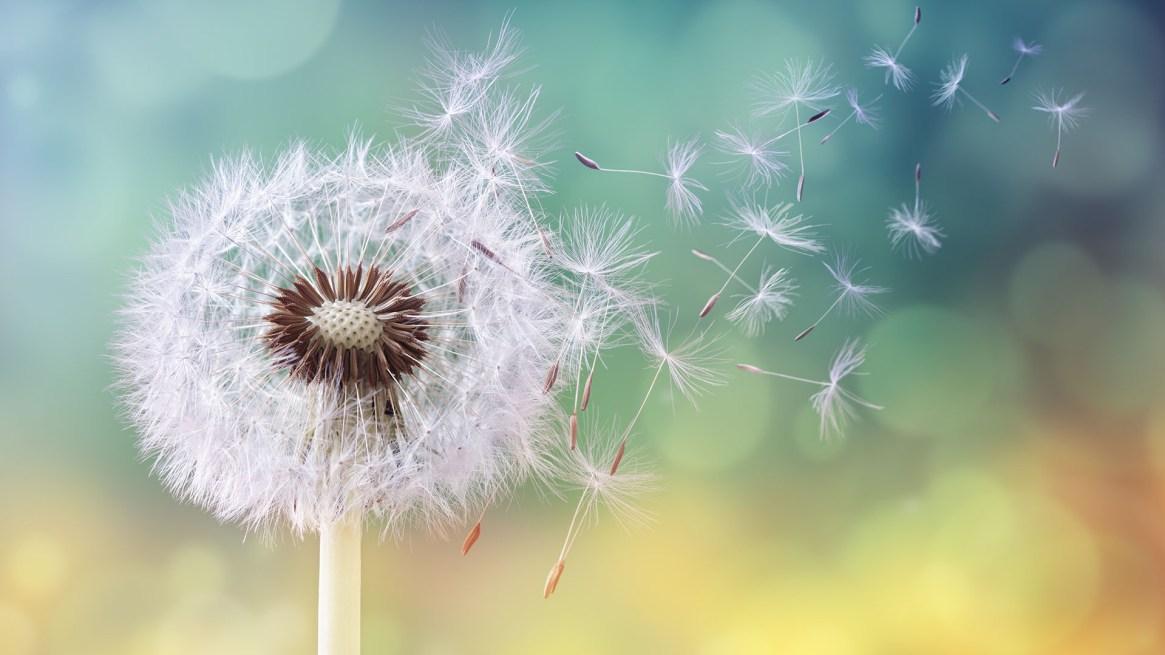 Otoño y primavera son, por excelencia, las épocas del año que mayor cantidad de reacciones alérgicas disparan (Getty Images)