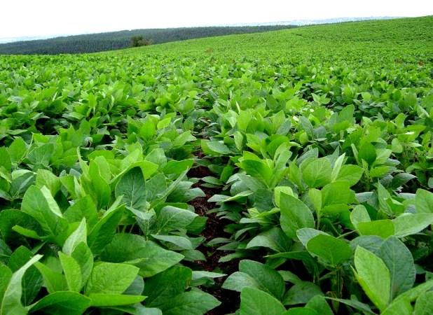 Por los efectos de la sequía, productores del norte del país pidieron una aceleración de la rebaja de las retenciones a la soja