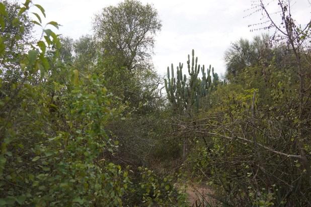 La densa y espinosa vegetación del Impenetrable (Raquel Peiro)