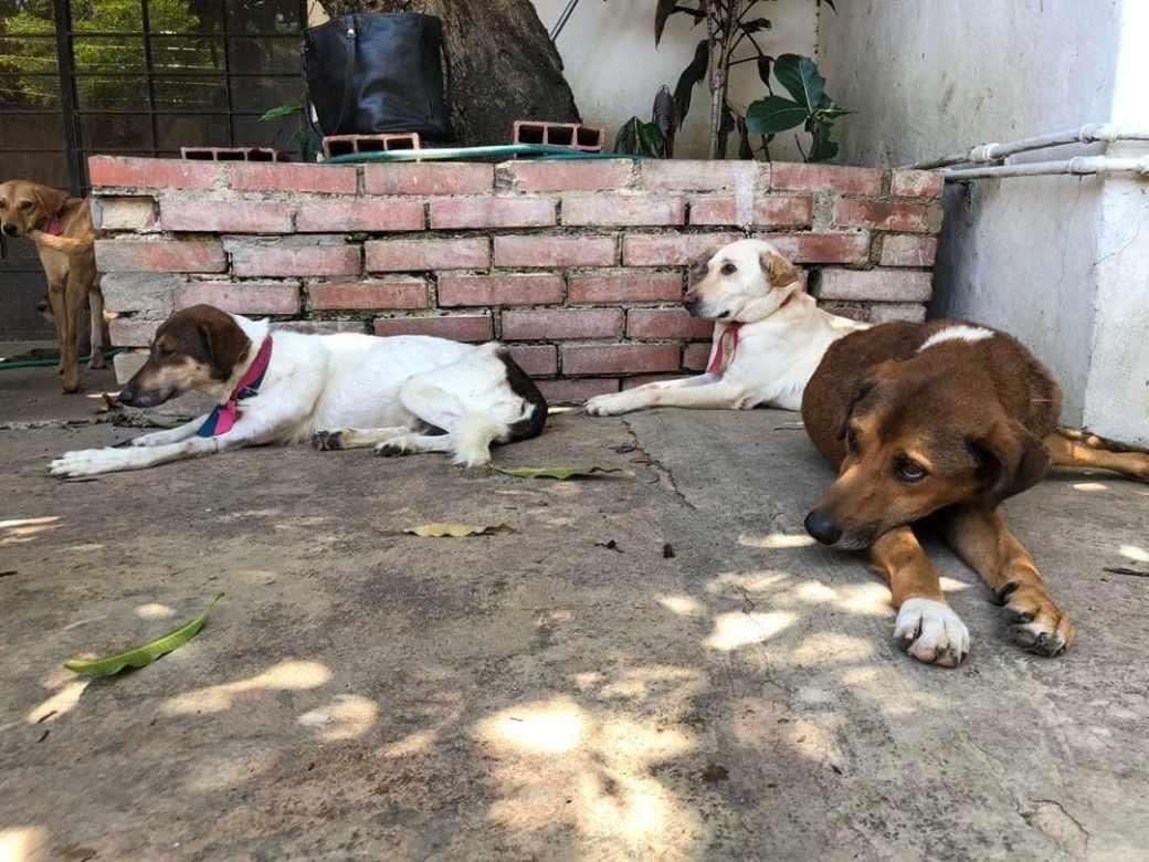 Canelo, Olivia y Serena son algunos de los perros que han sido entregados en refugios de Venezuela ya que sus dueños no pueden hacerse cargo de ellos debido a la grave situación económica que vive el país (Rachelle Krygier/The Washington Post)