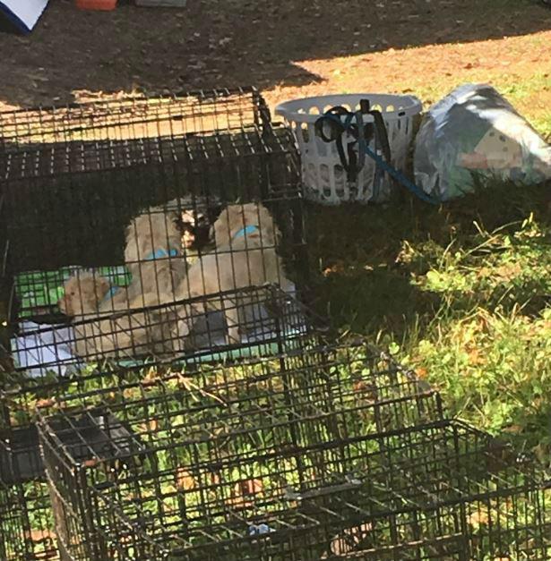 130 animales fueron rescatados del cautivero y las condiciones inhumanas.