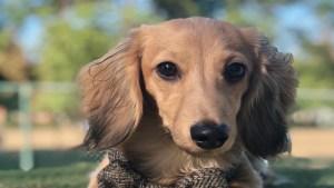 El perro llamado Remus, también tiene su propia cuenta de Instagram (Foto: Instagram)
