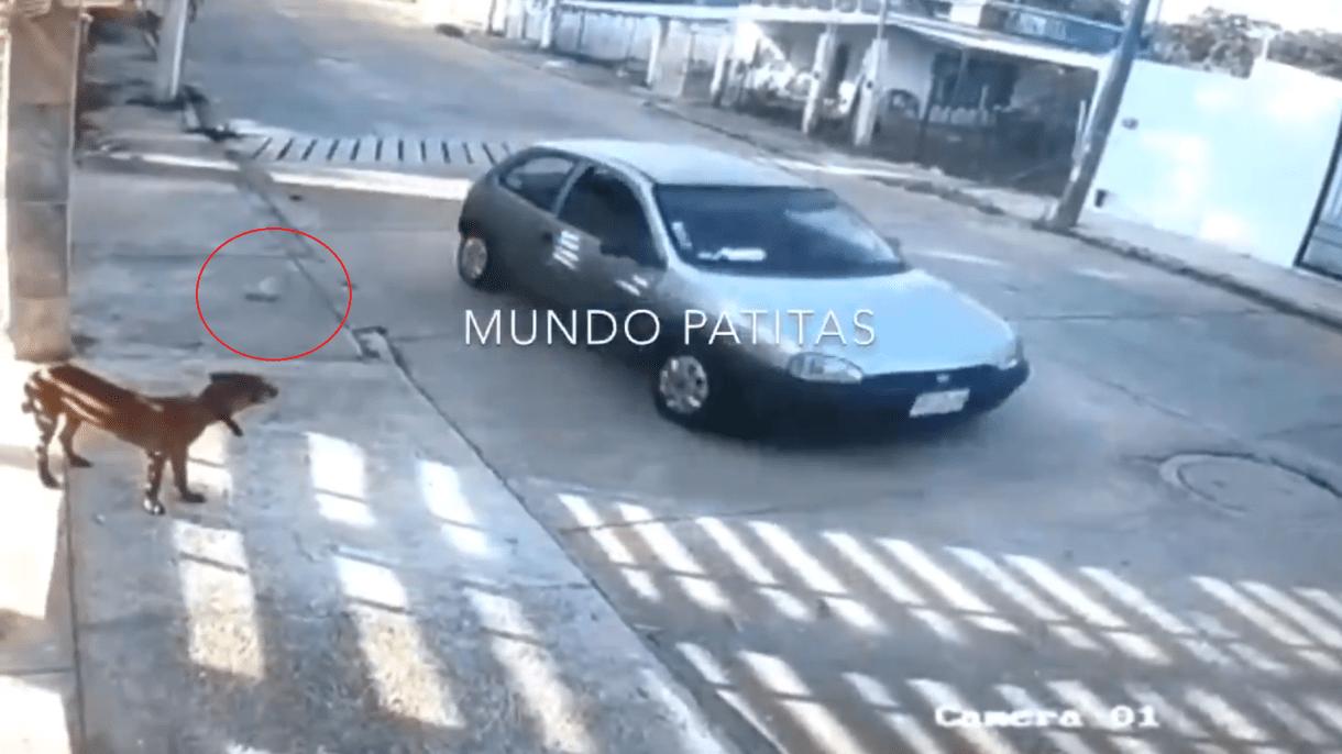 Después de realizar un cambio de sentido, el vehículo pasó junto a uno de los perros y le lanzó la bolsa con comida envenenada (Foto: Captura de pantalla @MundoPatitas)