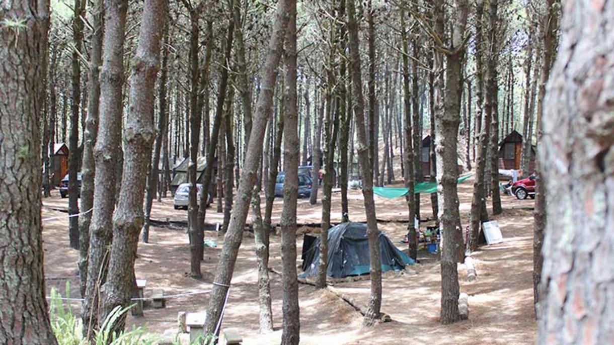 Estas tres opciones de hospedaje tienen un punto en común: emergen sobre bosques de pinos