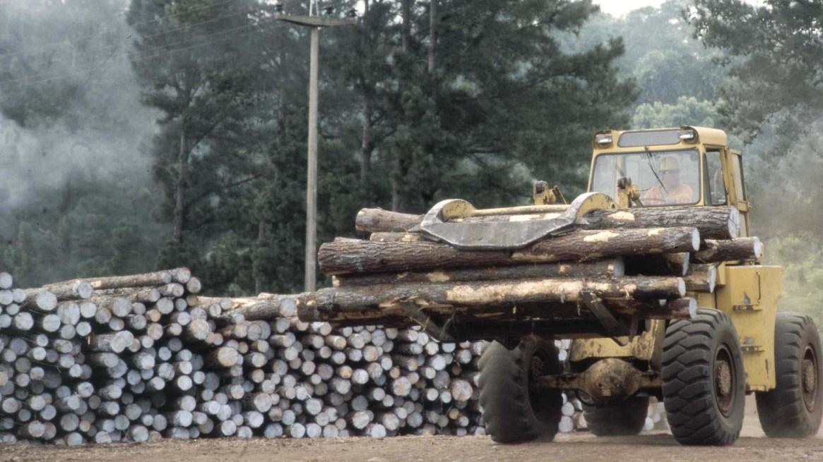 La deforestación y la destrucción de bosques nativos por el avance de la frontera agropecuaria es una de las causas de las inundaciones. Foto: Fernando Calzada/DEF.