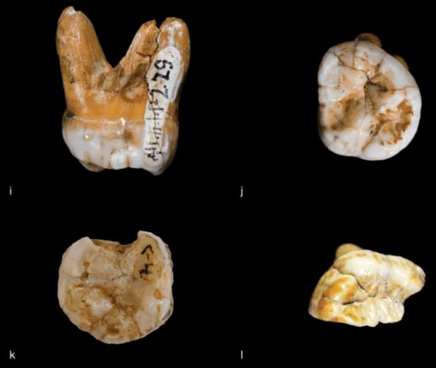 Materiales dentales hallados en las Cuevas de Denísova. (Nature)