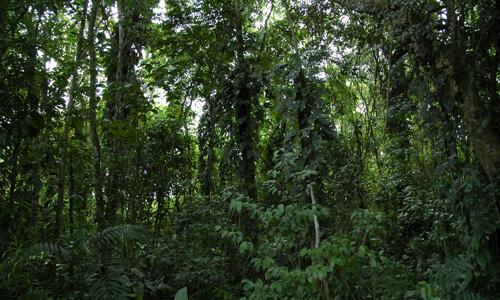 El área protegida tiene una superficie de 12.184 hectáreas (Foto: Conanp)