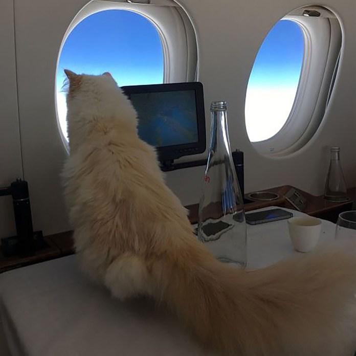 Choupette mira la ventana durante un vuelo privado