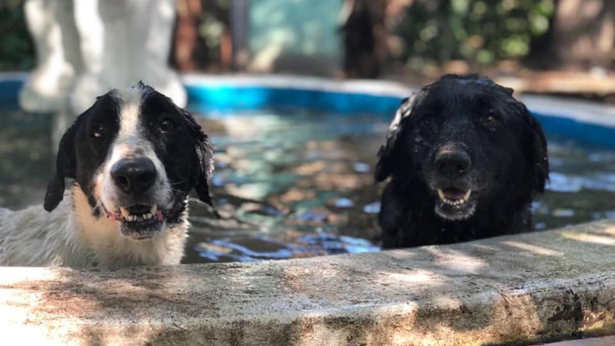 Aprani, el refugio de Alicia. Así pasan los veranos los perros en el refugio que fundó Alicia, en Moreno.