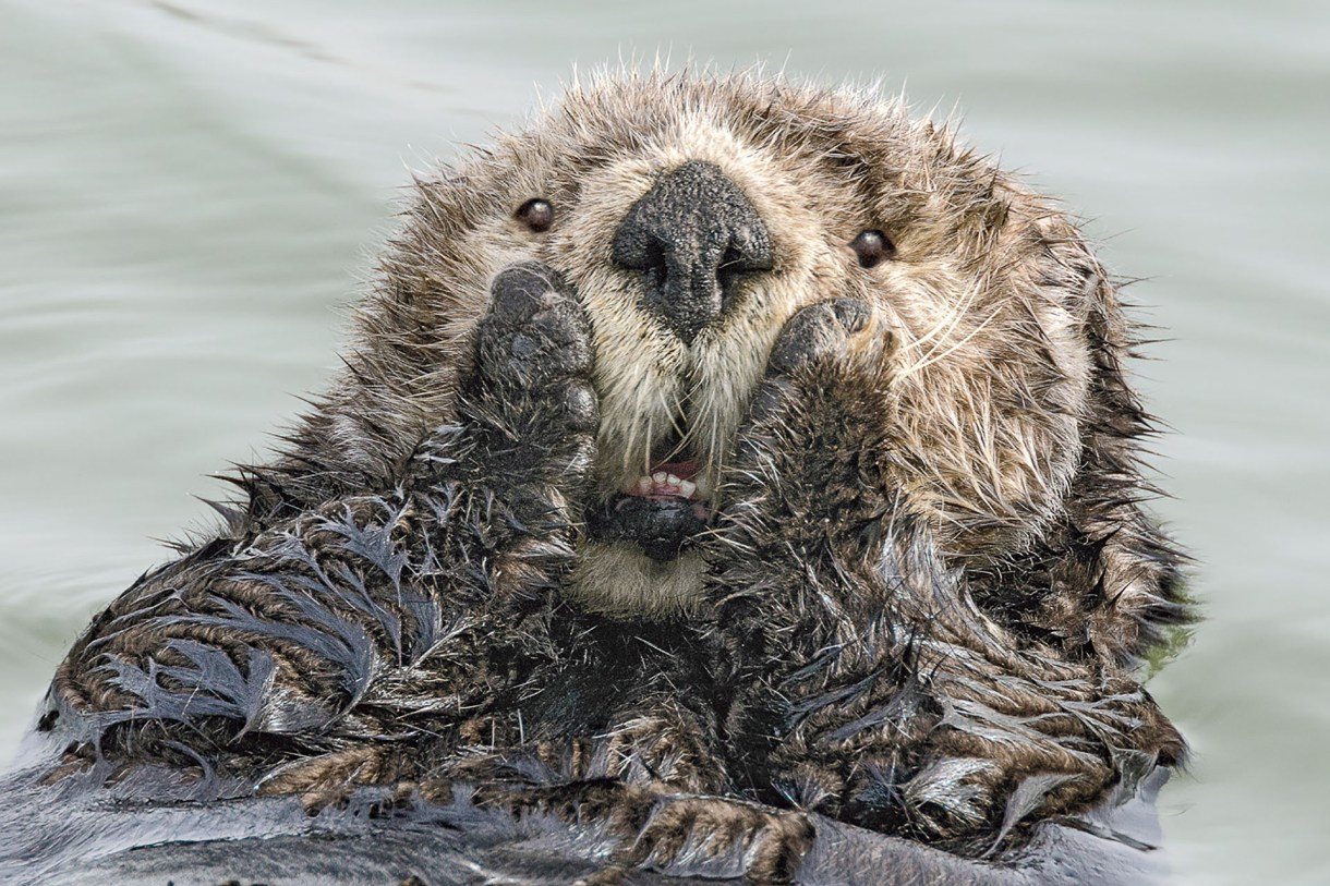 (Harry Walker/ The Comedy Wildlife Photography Awards 2019)