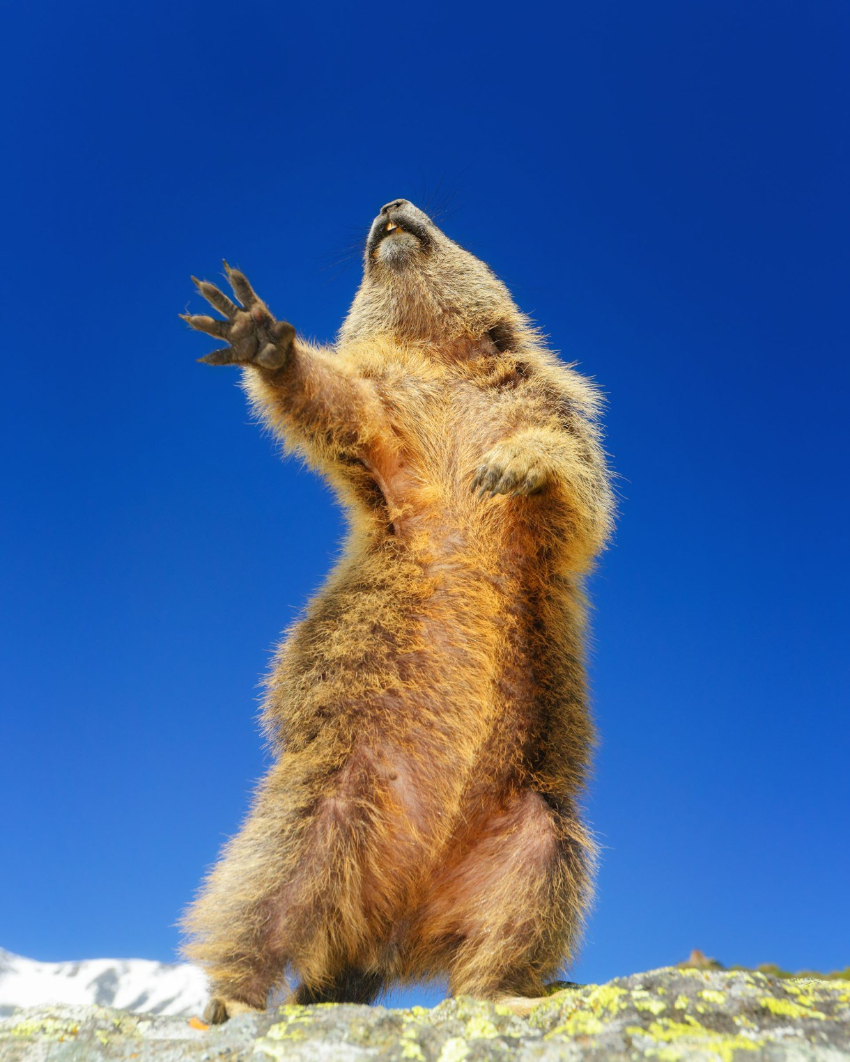 (Martina Gebert/ The Comedy Wildlife Photography Awards 2019)