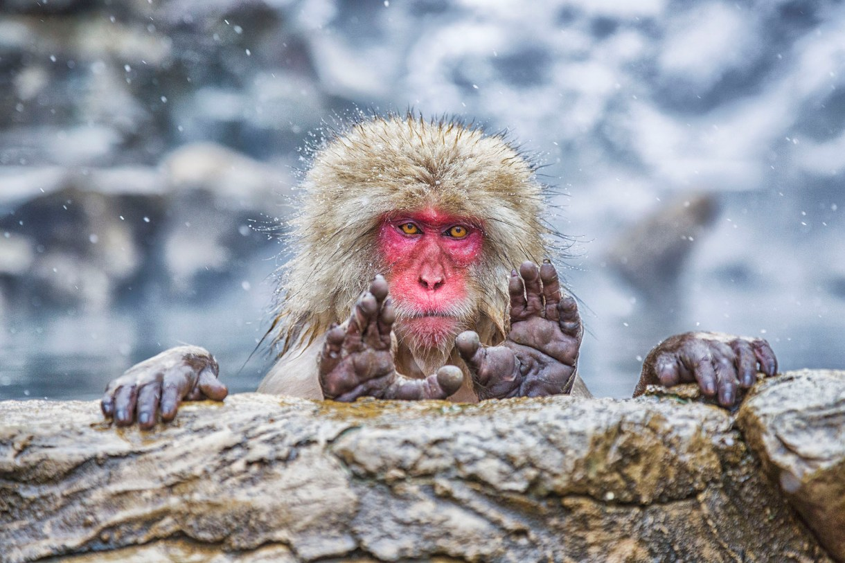(Pablo Daniel Fernandez/ The Comedy Wildlife Photography Awards 2019)